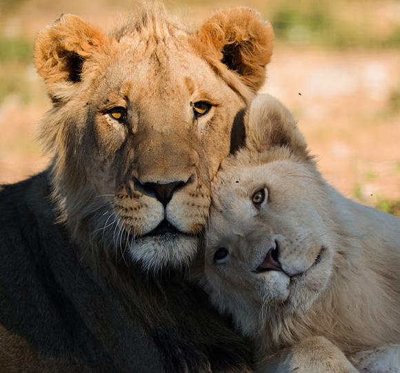 Brotherly Love by Pierre Steenkamp