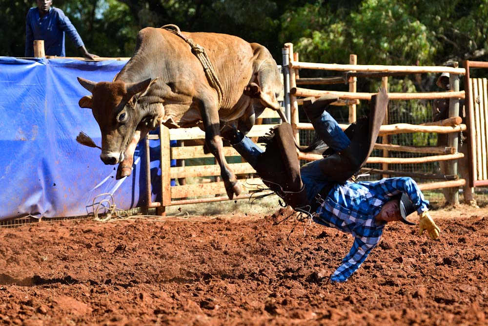 Rodeo bull rider performance at the Texas State Fair rodeo ...  |Texas State Sport Rodeo